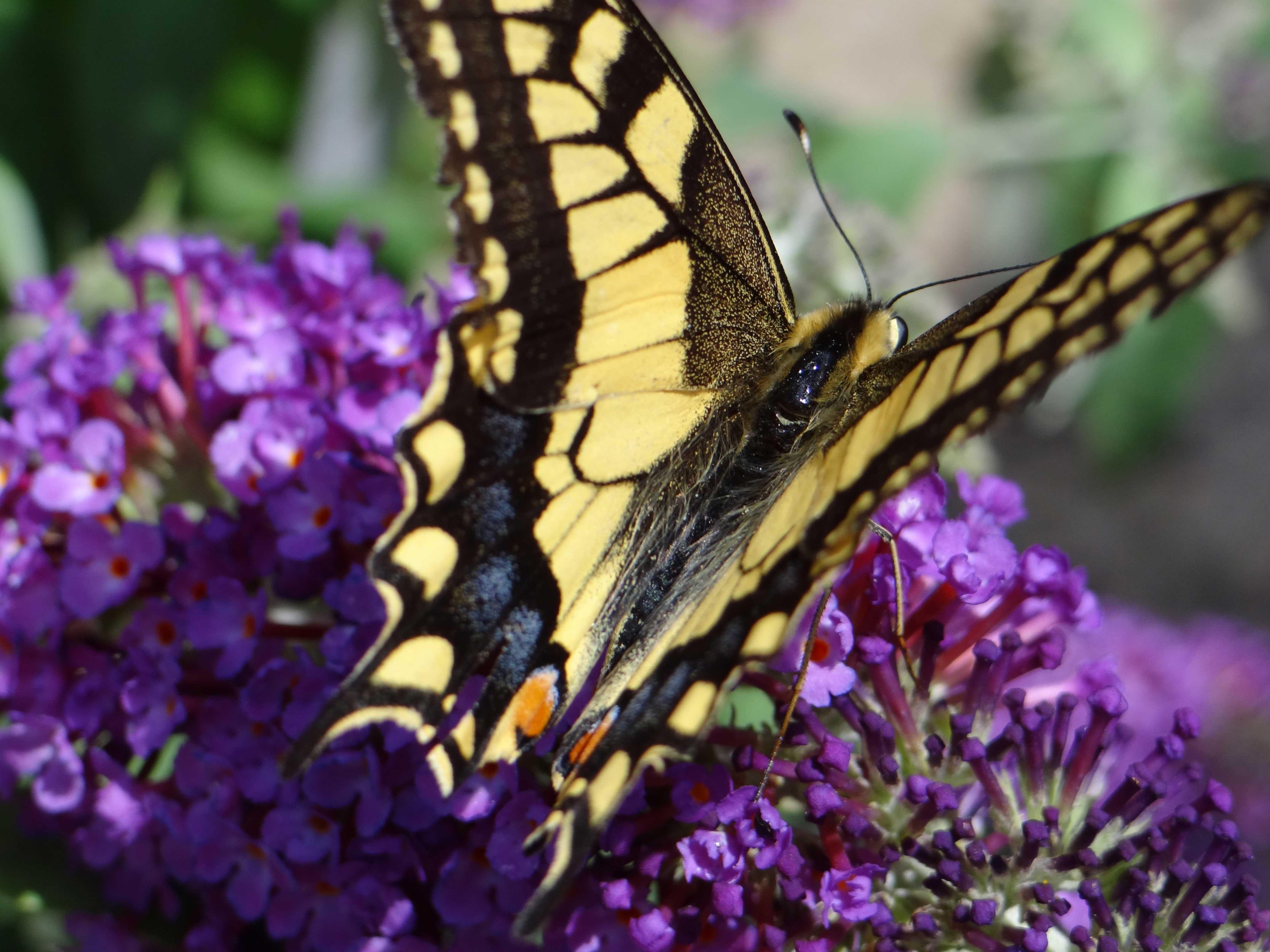 Schmetterlings- und Wildbienensaum